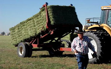 Staking Alfalfa Hay Ackermans Farming Colorado