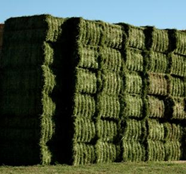 Alfalfa and Grass Hay for Sale North Eastern Colorado Near Greeley Delivery Available