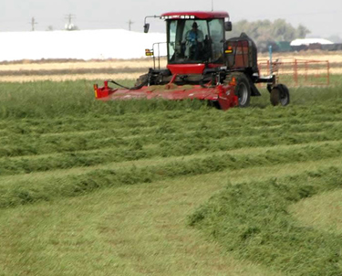 Custom Windrowing Grass & Alfalfa in Northern Colorado