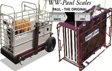 WW Paul Platform & Cage Scales