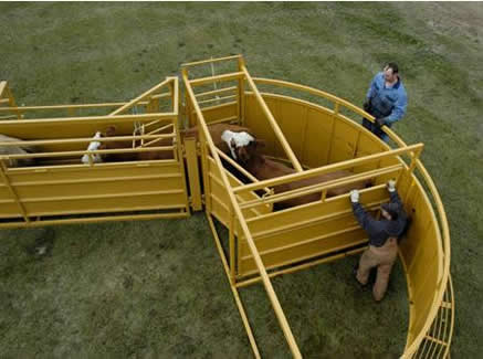 Sioux Steel Cattle Cornless Tub